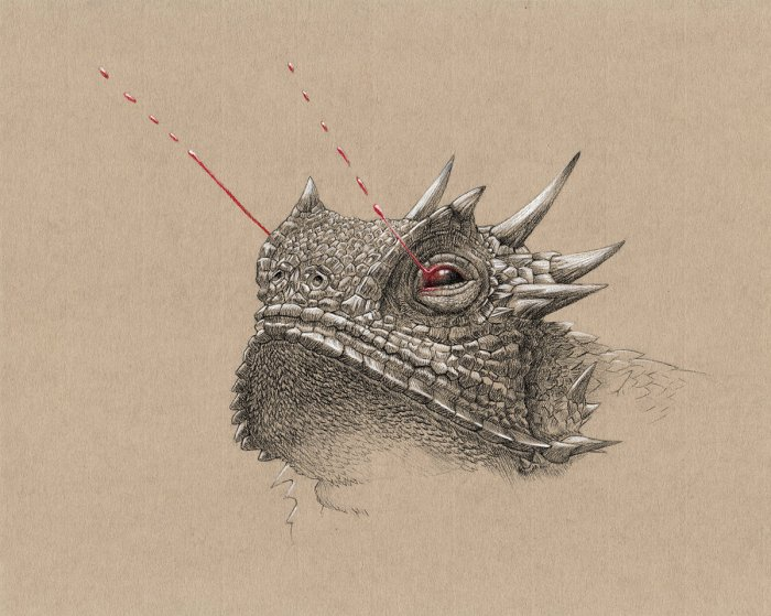 Horny Toad - Illustration for Wunderkammer at SMO